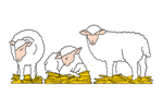 Three separate style sheep provide variety for your Christmas nativity scene