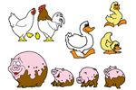 Ducks, chickens and pigs are great backayrd additions to your farmhouse style home