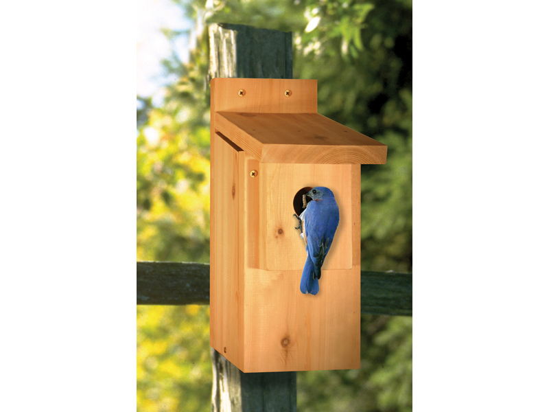 Bluebird house is the perfect place to keep birds visible in your backyard all year long