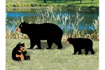 Painted bear and cubs yard art are great additions to a rustic backyard setting