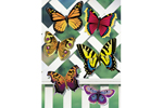 Five styles of beautiful butterflies can be painted and added to a latticed trellis or arbor